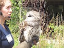 We learned about this owl while on our visit to The Wild Center, Tupper Lake NY  June 2016