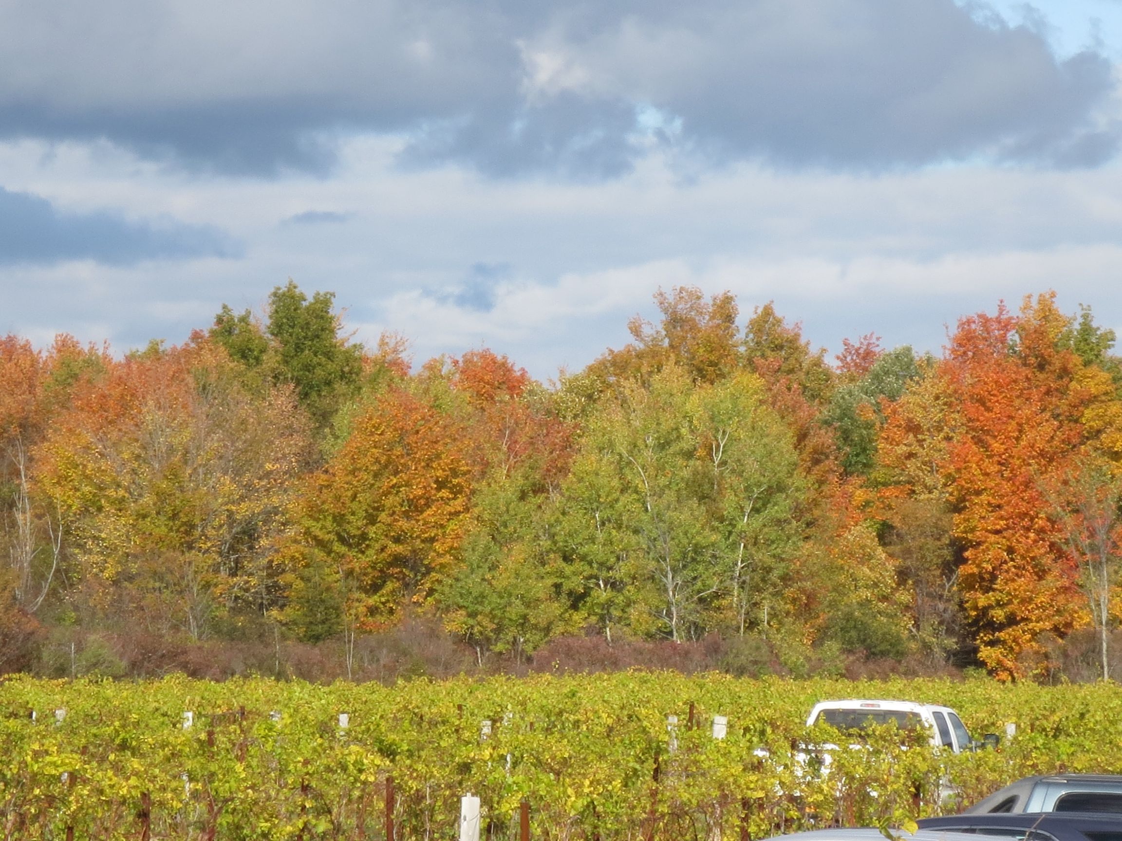 Fall foliage colors and vineyard